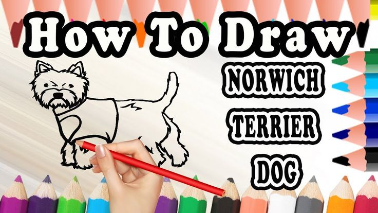 How To Draw A Norwich Terrier DOG | Draw Easy For Kids