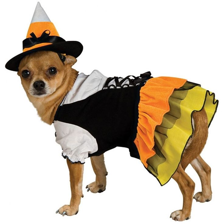 Candy Corn Witch Dog Costume Cute Pet Halloween Fancy Dress #RubiesCostumeCoInc