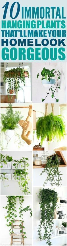 These 10 Low Maintenance Hanging Plants are THE BEST! I'm so happy I found these AMAZING ideas! Now I have a great way to decorate my home and not kill the plants! Definitely pinning!