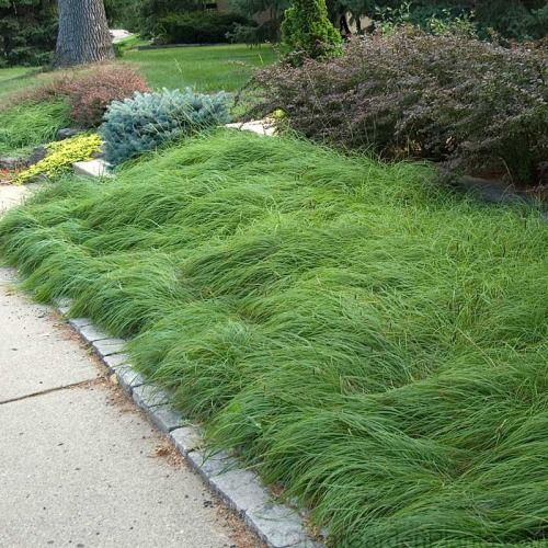 Shade Garden Plants Landscaping Ideas