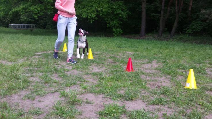 Podstawowe szkolenie psów. Zajęcia szczególnie zalecane psom słabo radzącym sobie ze swoją ekscytacją, przeżywającym fazę buntu.