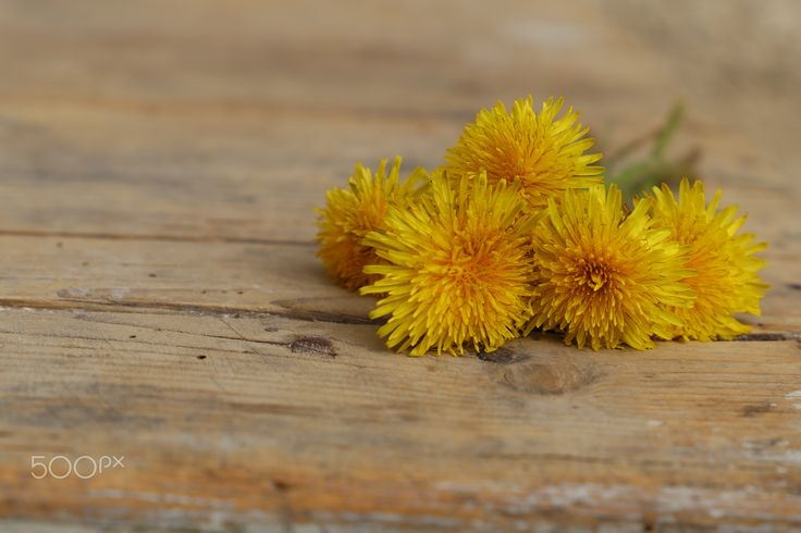 Dandelions - Dandelions on the table