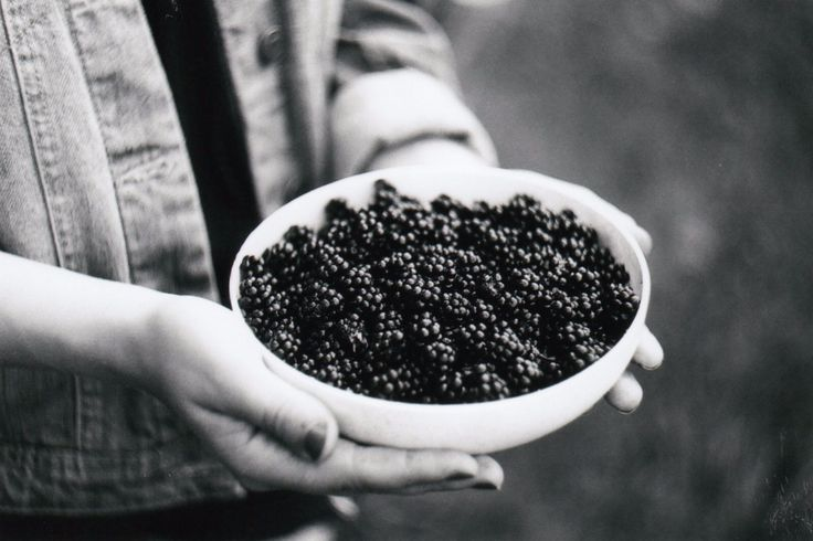 Blackberries, Zenit E, 35mm ♥️