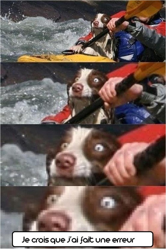 #chien #humour #rafting #drôle #eau #zoomalia #animalerieEnLigne