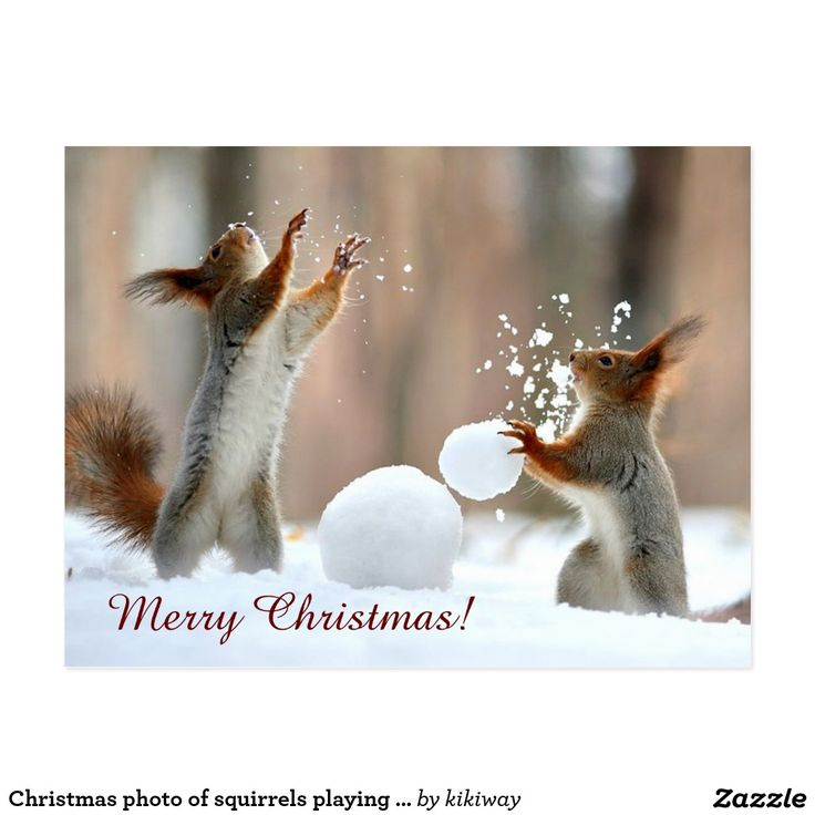 Christmas photo of squirrels playing with snow