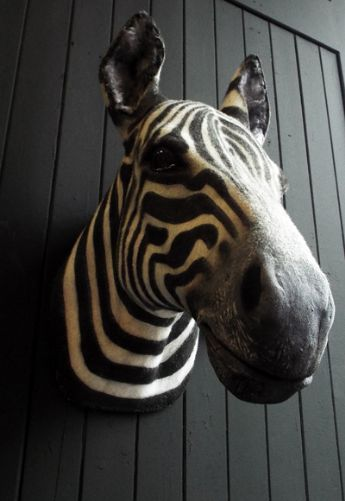 Faux Taxidermy Zebra Head