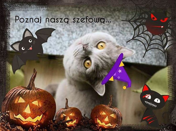 Szefowa czuwa. Jutro premiera Jatoko.pl, więc wszystko musi grać jak w zegarku. Strach się bać ;) #halloween #szefowa #kotkapola #meetmyboss #catstagram #jatoko #jatokopl #teamjatoko