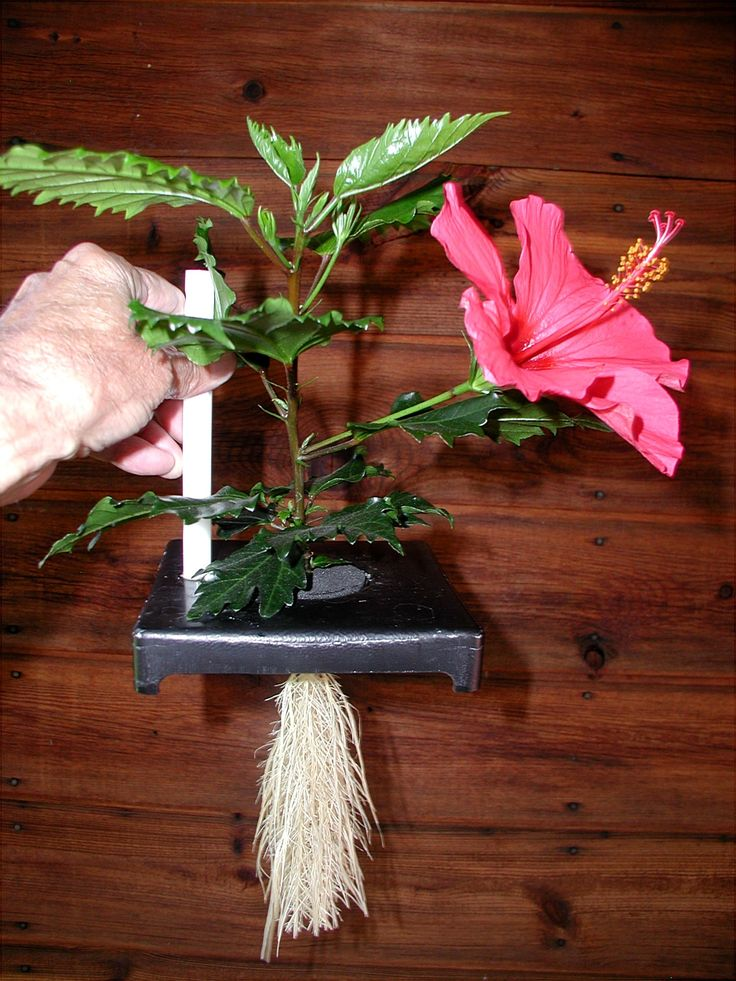 Thin Air Growing Systems, interesting: Growing System, Hibiscus, Hydro Aeropon, Aeropon Gardens, Air Growing, Diy Air Plants, Hydro Aqua Aeroponics Gardens, Aquaponics Hydroponics Aeropon, Aeropon System