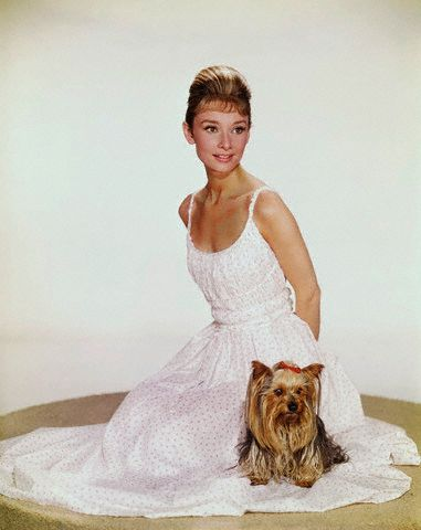 Audrey with her beloved Yorkie, Mr. Famous.  @Melissa Blake  I was looking at Yorkie pictures and thought of you!!