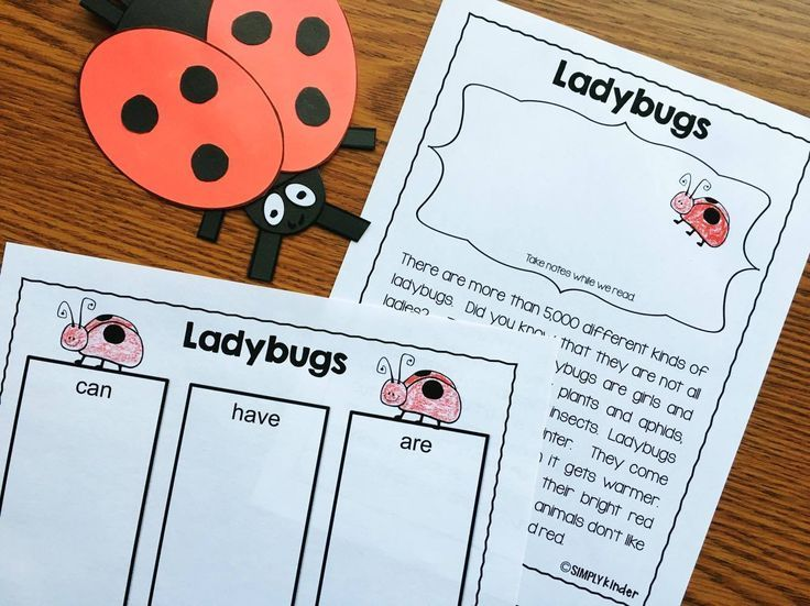 Lady bug reports  - Insect Reports - close reads with different graphic organizer and report options to meet the needs of your students.  Each also includes an adorable craft!