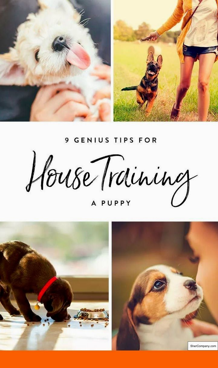 How To Train Your Dog To Come Back When Off The Lead And Dog