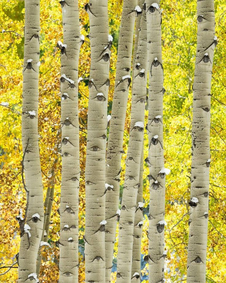 Just take a closer look at these aspen trees