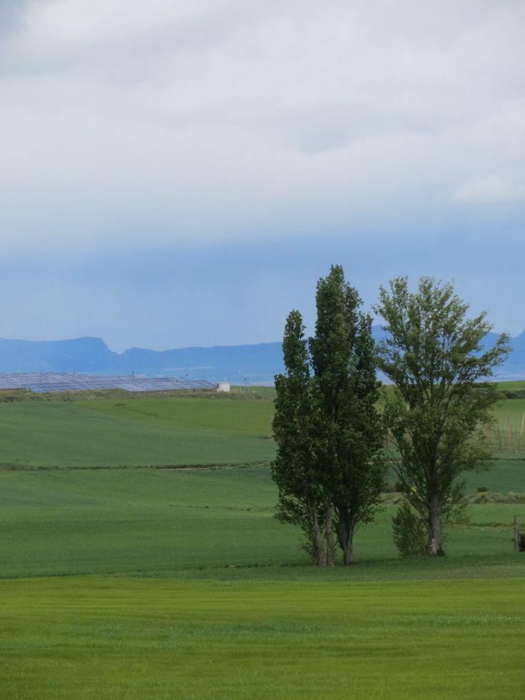 Serenity on the camino.
