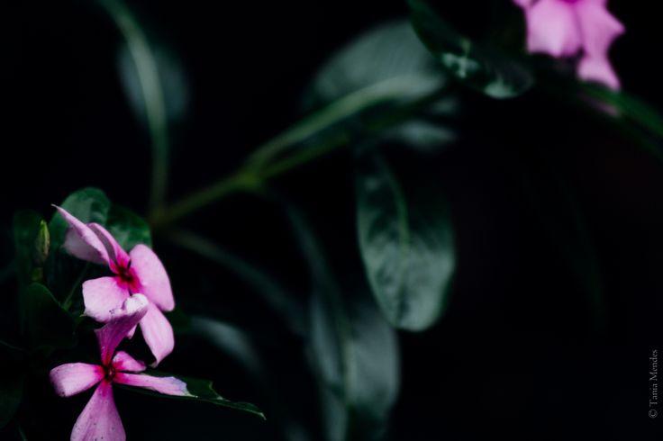 boa noite - grandma´s garden