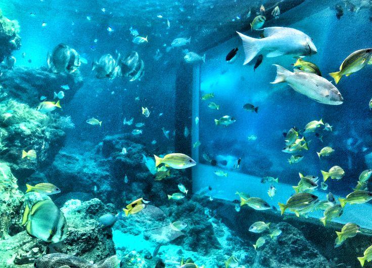 Okinawa Churaumi Aquarium (沖縄美ら海水族館)