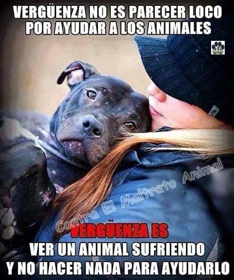 Me llaman loca ,pero me da igual,no hago daño a nadie solo hago lo que mi corazon me dice y eso deberian hacer el resto de los humanos ,los animales son seres vivos al igual que nosotros.