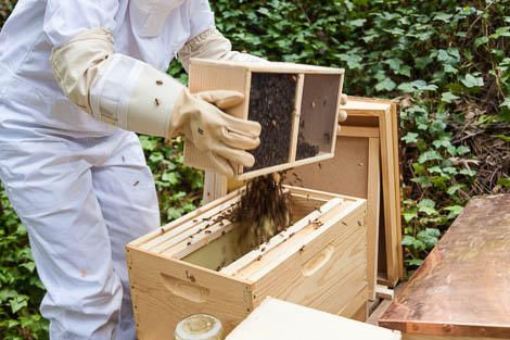 The first 10 days with your new honey bees are crucial for the colony's success