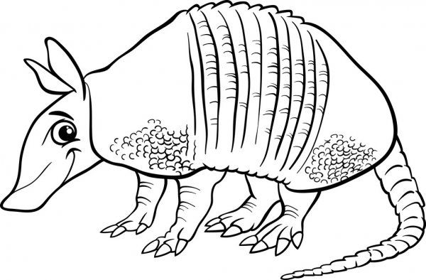 Armadillo Animal Cartoon Coloring Page Cute Coloring Pages Cartoon Coloring Pages Armadillo