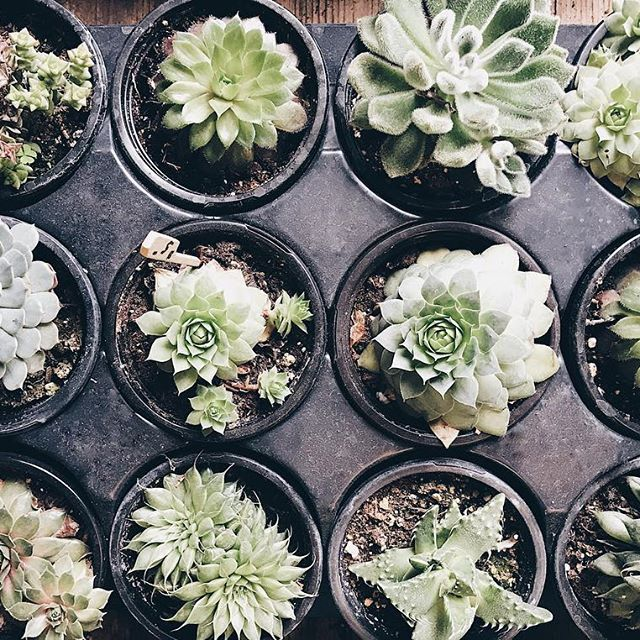 Des #Succulents trop #CoeurCoeur du #MarchéAtwater pour ce lundi matin ! . . . #AtwaterMarket #MarchePublicMtl #Succulent #SucculentsLover #Plant #Cute #Green #Nature #offtomontrealblog #OffToMontréalBlog