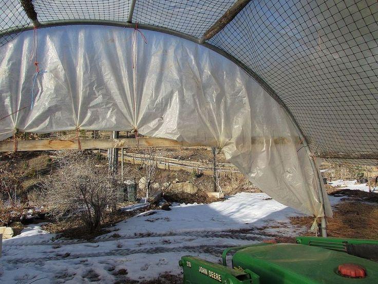 Amazing repurpose! Tattered trampoline to greenhouse frame.