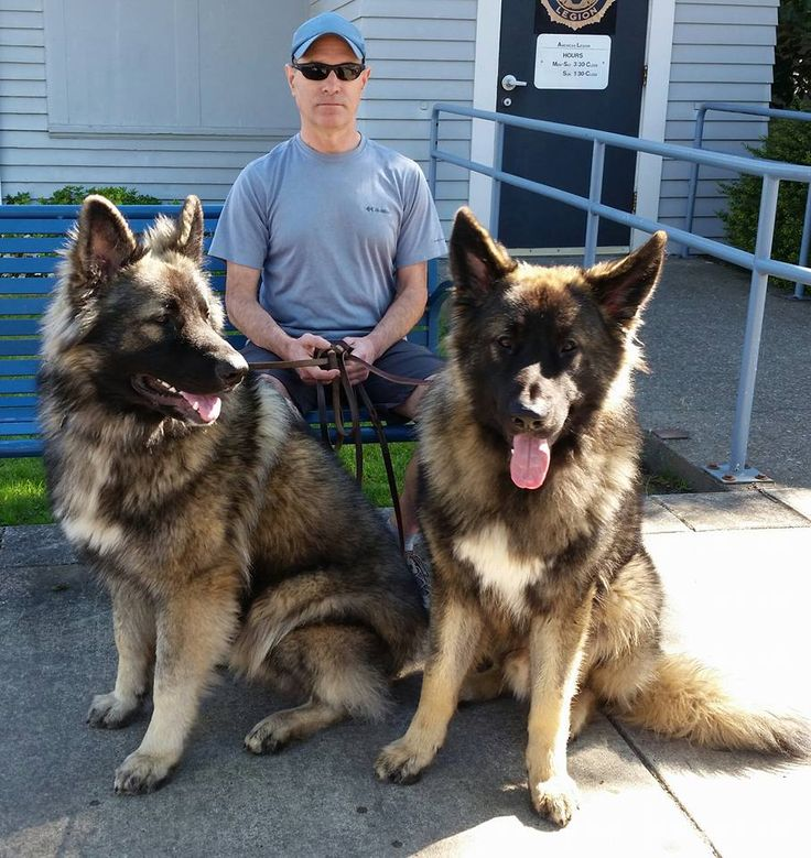 Zak and Rebel, 'The Beastie Boys', during a recent visit to Old Downtown Sherwood. Shiloh Shepherd