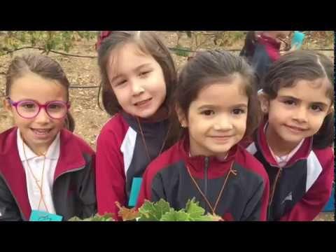 (5) VENDIMIA CON LOS ALUMNOS DE 3º DE INFANTIL - YouTube