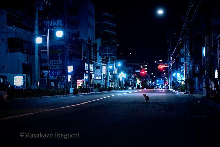 BLOG「路上のルール」 〜東京の街に暮らす野良猫たちの記録写真〜: 深夜の路上で