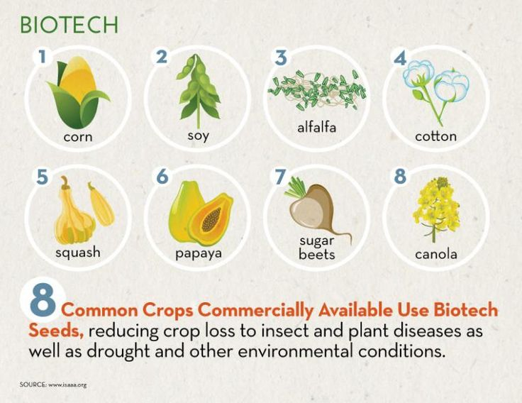 Did you know there are only eight GM Crops in the U.S.? All these crops have been tested and verified safe by the FDA and USDA