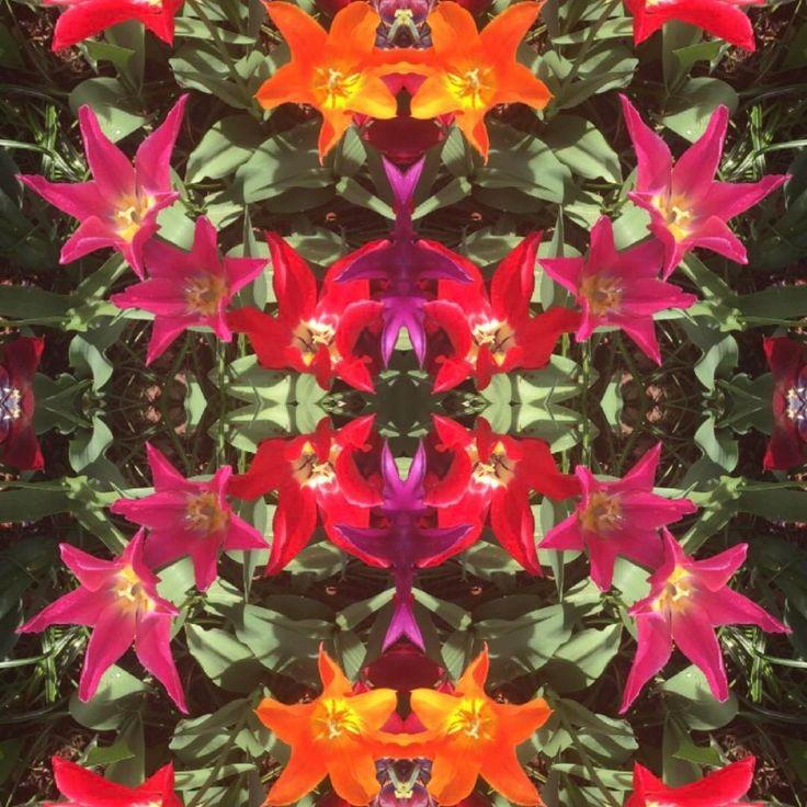 Tulip time! 🌷🔸🌷We just adore the color combination of pink, orange and red! #colourful #strövadesign #surfacepattern #digitalart #pattern #print