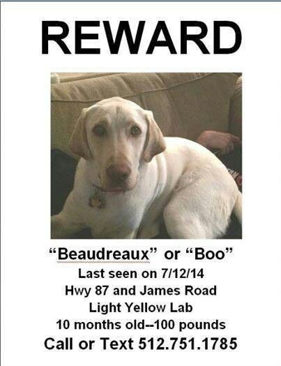 #lostdog #Galveston #TX ***LOST DOG*** Male Yellow Labrador, young, 100bs, named BOO. Missing since 07.12.14 near Hwy 87 and James Rd.  Call Julie Denny Doss at 512-751-1785.   @lostdogsoftexas