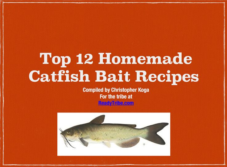 homemade catfish bait