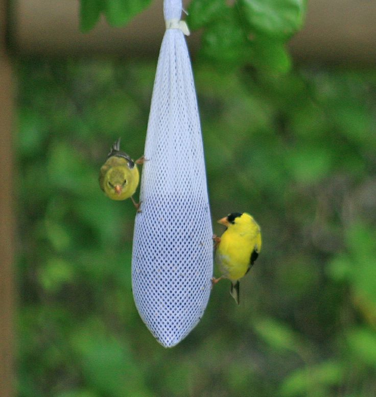 Stropdas vullen met vogelzaad en ophangen voor de Finches