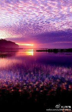 Violet  sky.
