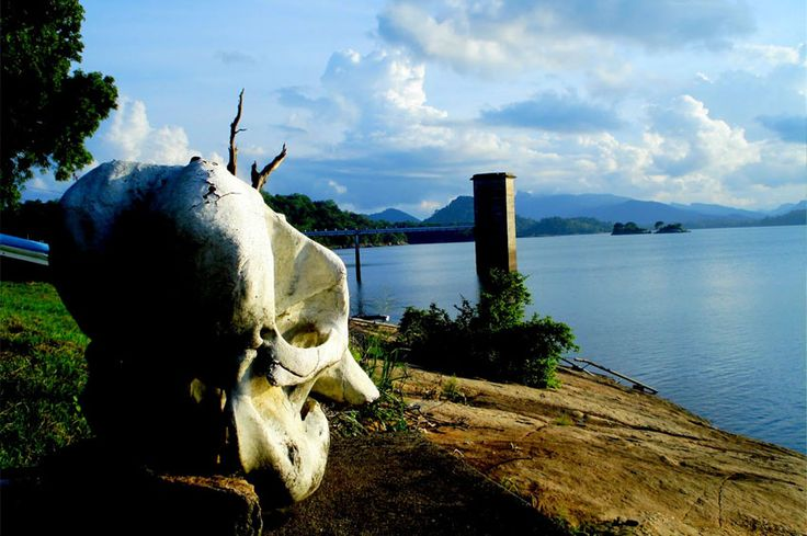 GAL OYANATIONAL PARK  Established in 1954 and serves as the main catchment area for Senanayake Samudraya, the largest reservoir in Sri Lanka, Gal Oya National Parkis located 314km away fromColomboin Badulla District with part of it stretching into Ampara District.