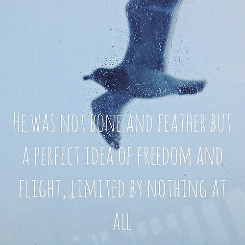 bastille lyrics albatross