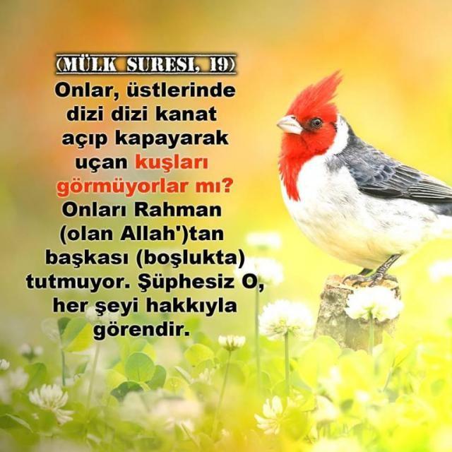 Onlar, üstlerinde dizi dizi kanat açıp kapayarak uçan kuşları görmüyorlar mı? Onları Rahman (olan Allah)tan başkası (boşlukta) tutmuyor. Şüphesiz O, her şeyi hakkıyla görendir. [Mülk Suresi, 19]