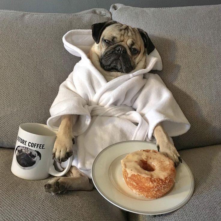 "Doug The Pug on Instagram: """"I told myself I'd go on a run this morning"" -Doug"""
