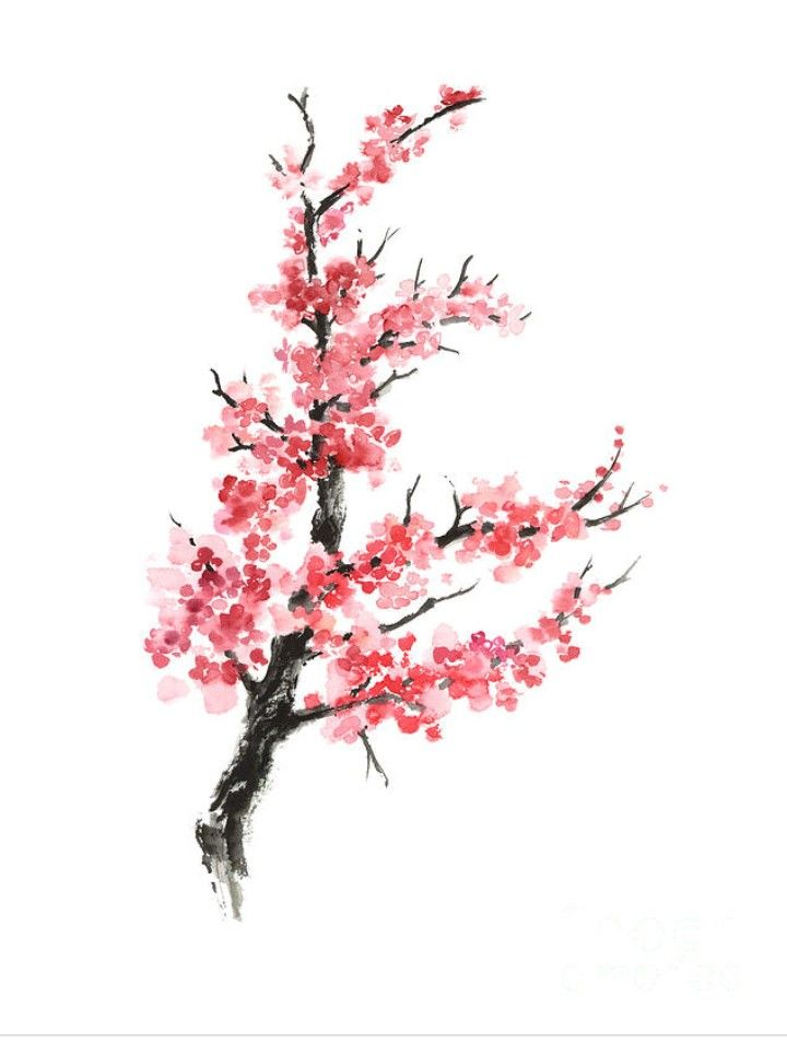 In The Traditional Chinese Culture Cherry Blossoms Stand For