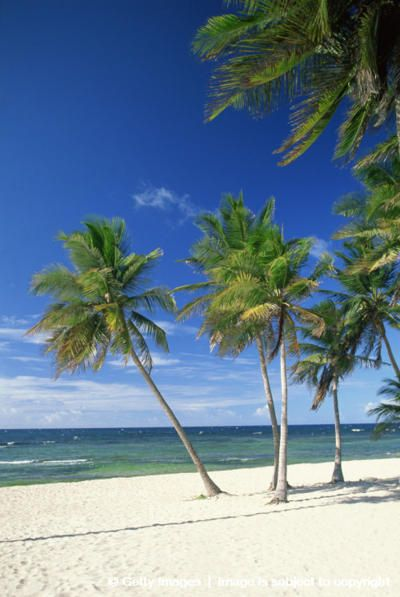 67 Best St Croix Images On Pinterest Usvi Bays And