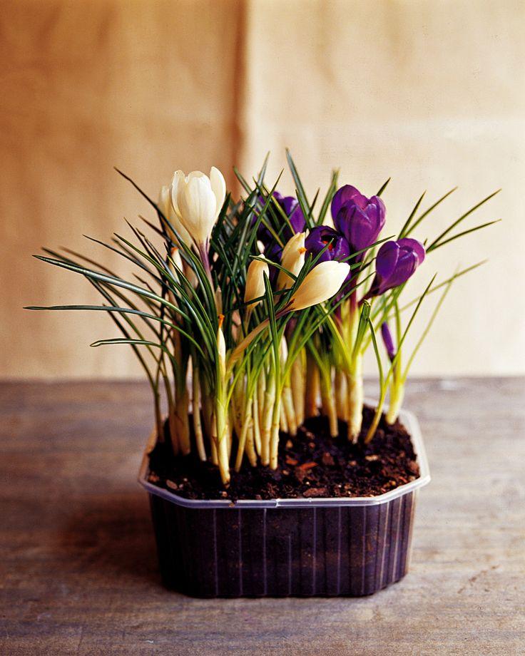 Oltre 25 fantastiche idee su vasi da fiori su pinterest for Contenitori da giardino