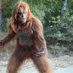 Latest Bigfoot News | Bigfoot Lunch Club: New Clues to SyFy Bigfoot Movie Starring Danny Bonaduce