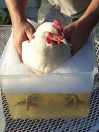 11 Uses for Vinegar Around the Coop...1. Adding Vinegar to The Chicken's Water....2. Cleaning Eggs...3. Conditioning Rinse for Bath Time...lol..4. Removing Mineral Build Up on Waterers...5. De-buggin the Nesting Boxes and Coop...6. Foot Soak...7. Loosens Grime from Difficult Areas...9. Cleaning the Incubator...