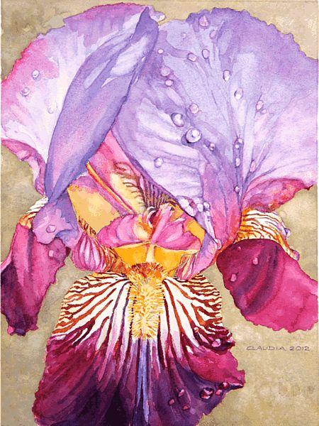 Solomon's Glory by Claudia Engel