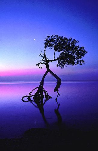 dancing tree? Or is it an Ent testing the temperature of the lake? ; )