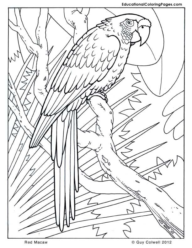 macaw coloring pages birds coloring