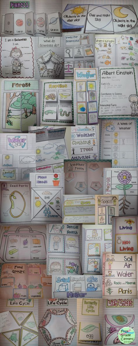 Interactive Science Notebook: K-2 Covers so many topics: five senses, animal groups, habitats, space, weather, season, nutrition, life cycles, plants, and more!  $