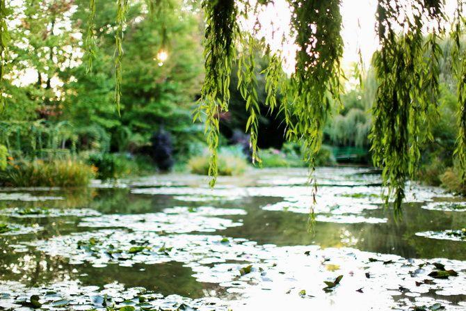 17 best images about pond bog on pinterest gardens for Jardins de monet a giverny