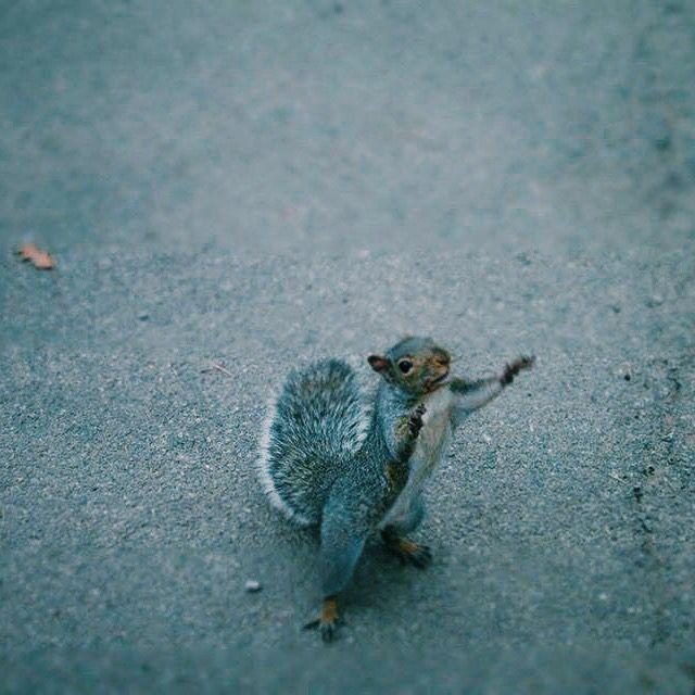 Squirrel, New York , VSCO cam