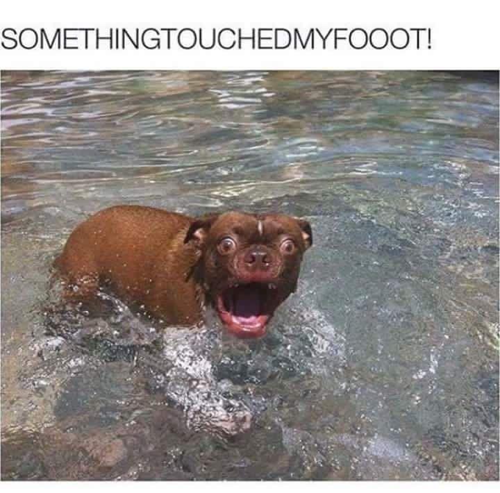 Dog Life Jacket Pet Dog Life Vest Safety Clothes Swimwear Swimsuit Dog Swim Vest Float With Images Funny Animal Memes Funny Dog Pictures Funny Animals