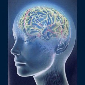 Мозг человека: как управлять подсознанием. Крайне важно осознать и принять решение: или подсознание управляет нами, или мы управляем подсознанием и используем его возможности себе во благо. Потому что мы способны выбирать и контролировать только то, что осознаем. Но то, что мы не осознаем – контролирует нас.